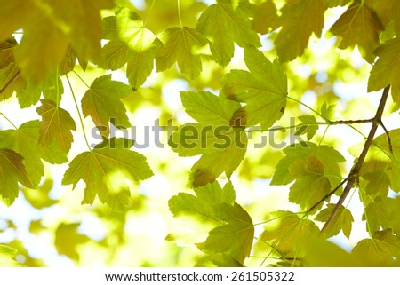 green leaves - stock photo