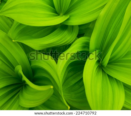 green leaves abstract background - stock photo