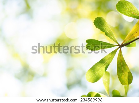 Green leaves against the sky with bokeh background - stock photo