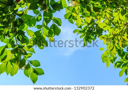 green leaves and blue sky background