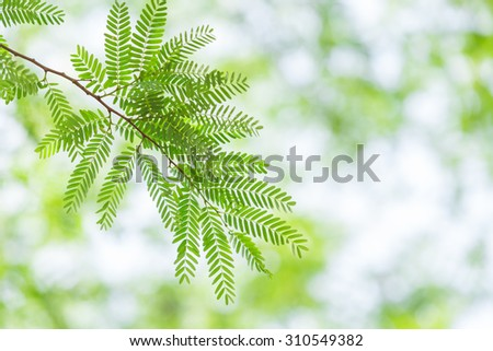 green leaves and branches