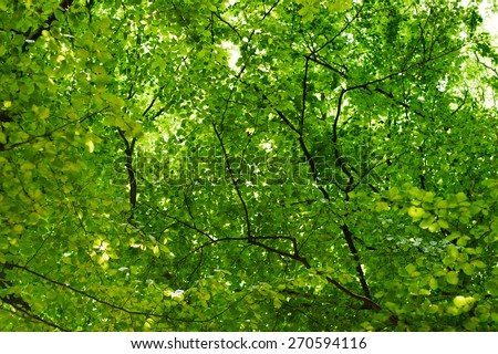 green leaves and brunches background - stock photo