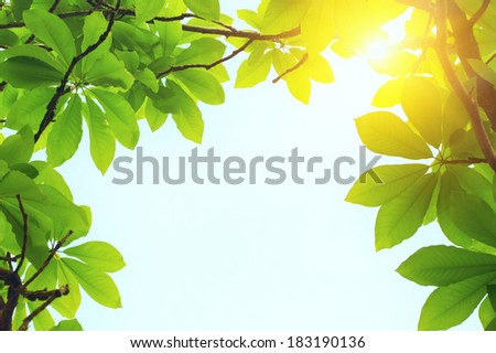 green leaves and sun light at spring day with blue sky - stock photo