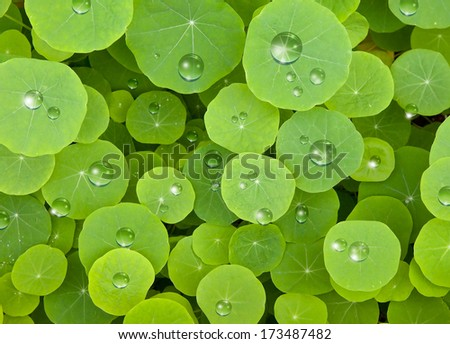 green leaves and water drops  - stock photo