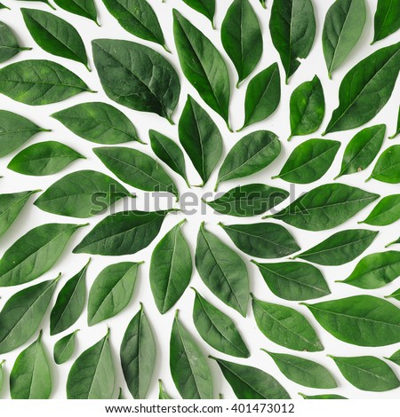 Green leaves arranged spiral shape on stock photo 401473012 green leaves arranged in spiral shape on white background flat lay sciox Gallery