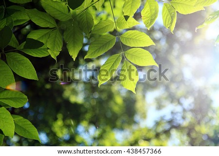 Green leaves background in summer with shallow depth of field and sun flare