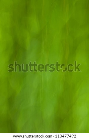 Green leaves blur background