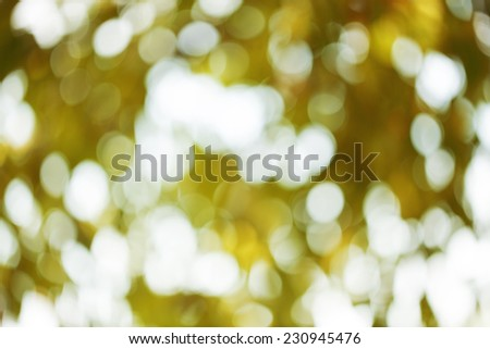 green leaves bokeh background outside day - stock photo