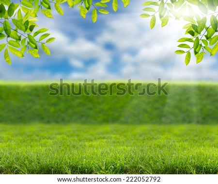 Green leaves border on the blurred background