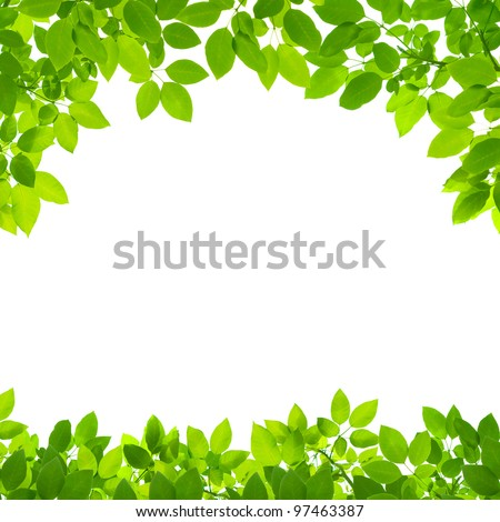green leaves border on white background - stock photo