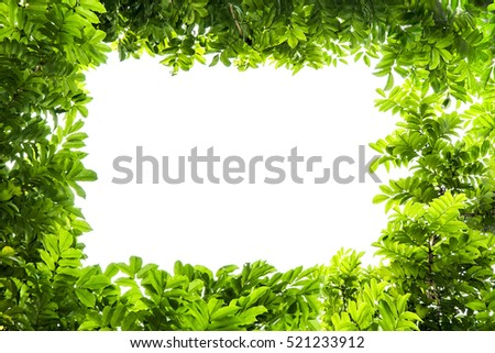 Green leaves frame background with copy space.