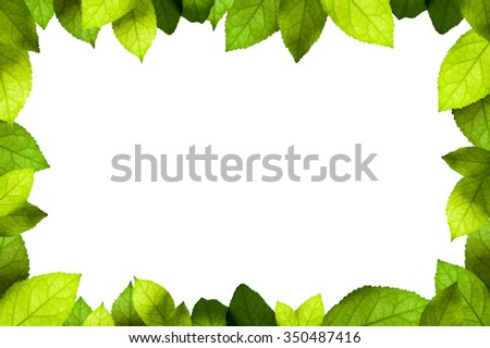 Green leaves frame isolated on white background - stock photo