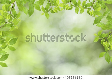 Green leaves frame on abstract green nature background  - stock photo