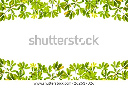 green leaves frame on white background - stock photo