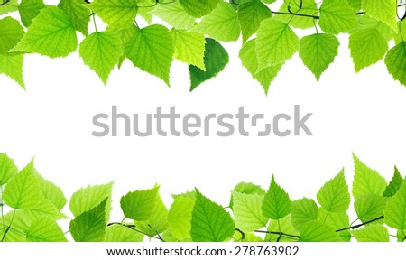 Green leaves frame on white background. - stock photo