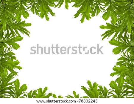 green leaves frame on white background with copy space