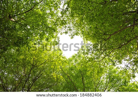 green leaves heart - stock photo
