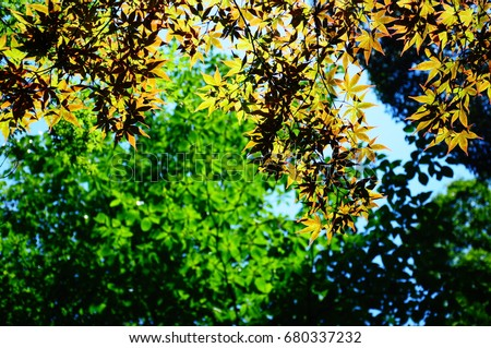 https://thumb9.shutterstock.com/display_pic_with_logo/167494286/680337232/stock-photo-green-leaves-in-a-park-in-japan-680337232.jpg