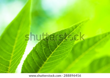 Green leaves in forest. Perfect natural background.