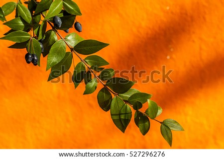 Green leaves in front a colorful orange wall