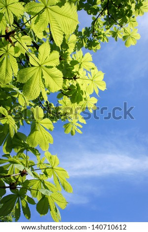 Green leaves in front of a blue sky. Copy space - stock photo