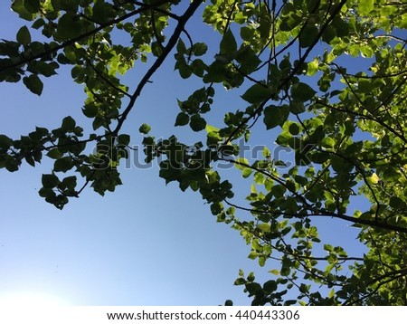Green leaves in front of blue sky