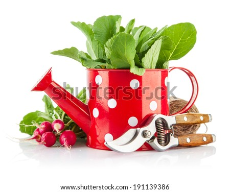 Green leaves in red watering can and tools for gardening. Isolated on white background - stock photo
