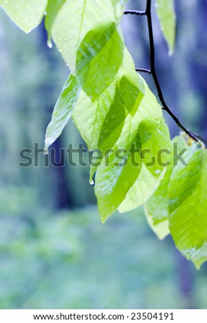 green leaves in spring on a blue background - stock photo