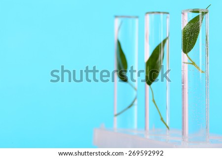 Green leaves in test tubes on color background - stock photo
