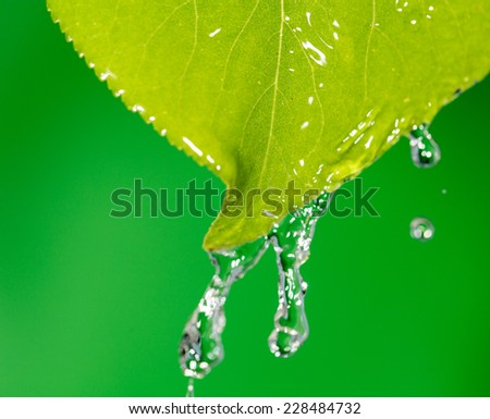 Green leaves in water - stock photo