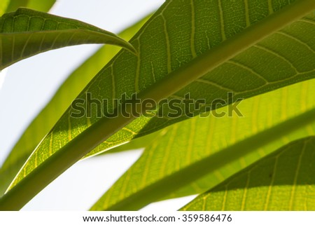 green leaves isolated against the blue sky. some leases are in focus while others are blurred.   - stock photo