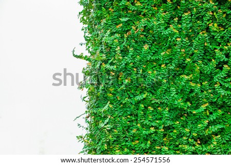 Green leaves isolated on a white background - stock photo