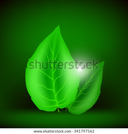 Green Leaves Isolated on Soft Green Background. Eco Icon with Green Leaves. - stock photo