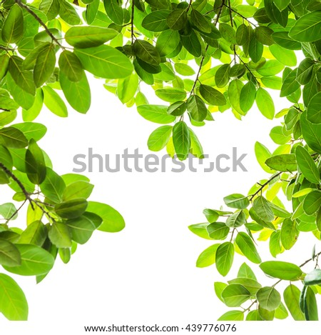 green leaves isolated on white background - stock photo
