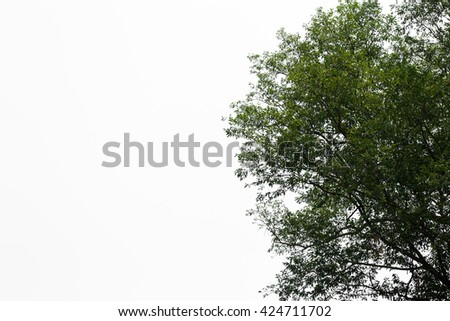 Green leaves isolated on white background and free copy space - stock photo