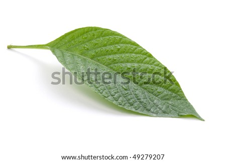 Green leaves isolated on white background, nature concept - stock photo
