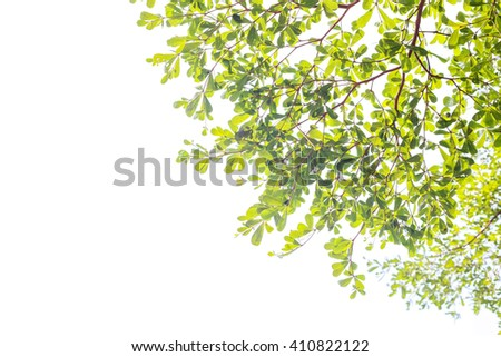 green leaves isolated on white background with copy space. - stock photo