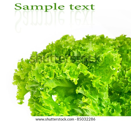 green leaves lettuce isolated on white
