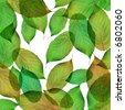 green leaves macro - stock photo