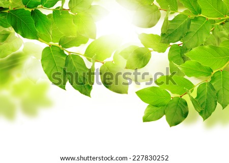 Green leaves. Nature concept. - stock photo