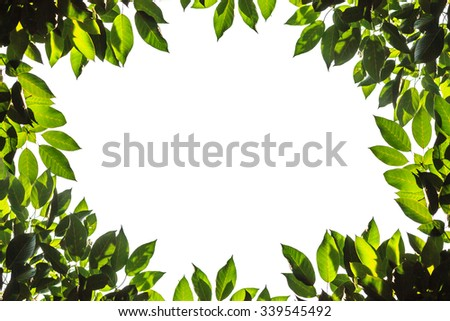 green leaves nature of frame on white background - stock photo
