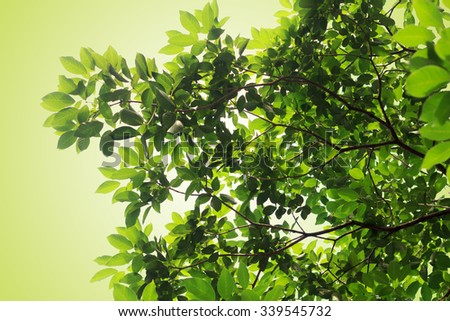 green leaves nature  on green background - stock photo