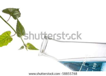 Green leaves next to an erlenmeyer flask with blue liquid in it. - stock photo