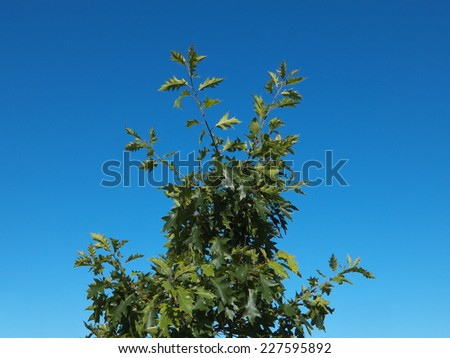 Green leaves of tree on blue sky background - stock photo