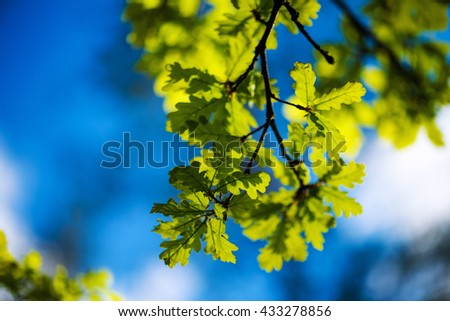 green leaves on a background of blue sky - stock photo