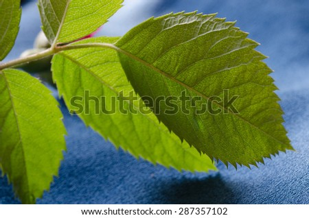 green leaves on blue textile background