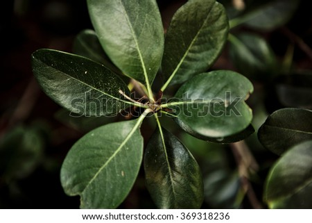 Green leaves on on black background, Shallow Focus - stock photo