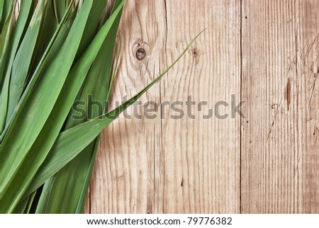 green leaves on the background of a wooden wall - stock photo
