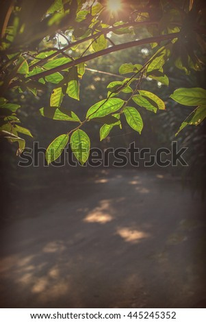 Green leaves on trees in the shade.