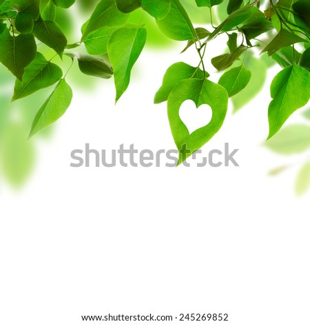 Green leaves on white background. Friendly to nature concept. - stock photo